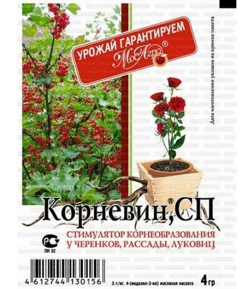 Роза дала росток в вазе: как сажать