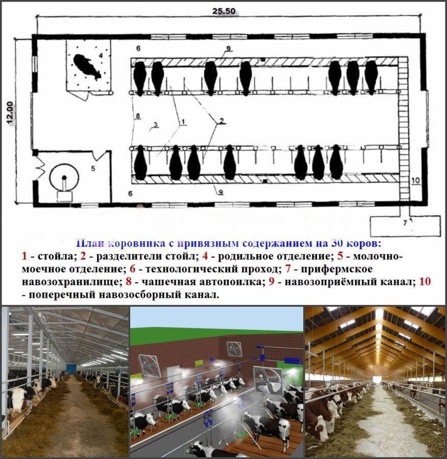 Коровник своими руками: как правильно сделать полы и построить помещение для коровы и теленка, размеры и чертежи для этого