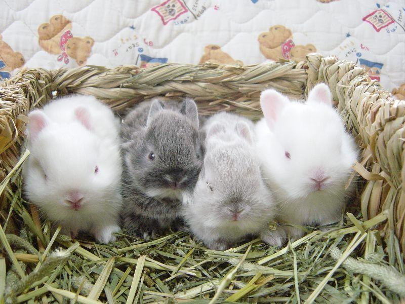 Новорожденный крольчонок