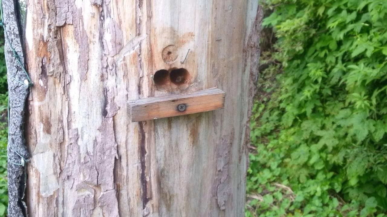 Разведение пчел в колодах