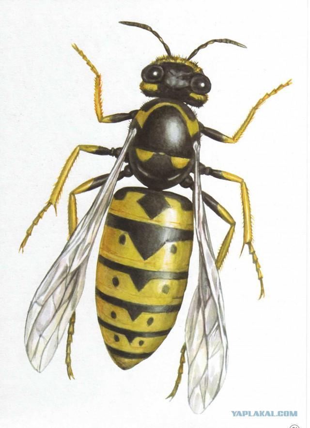 Что делают осы в природе