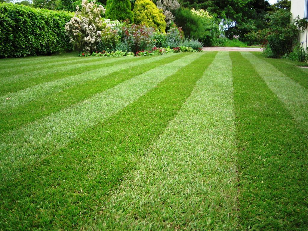 Когда лучше сажать газонную траву, осенью или весной