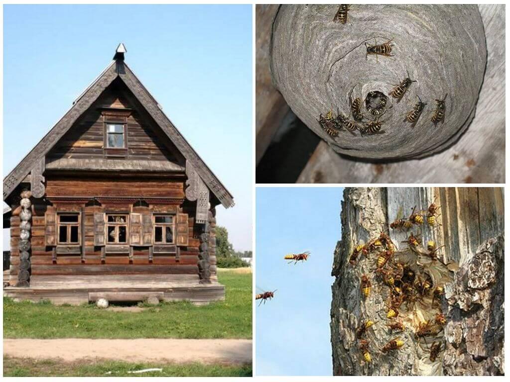 Как вывести древесных пчел из деревянного дома