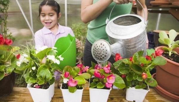 Почему желтеют листья у гибискуса: что делать с растением