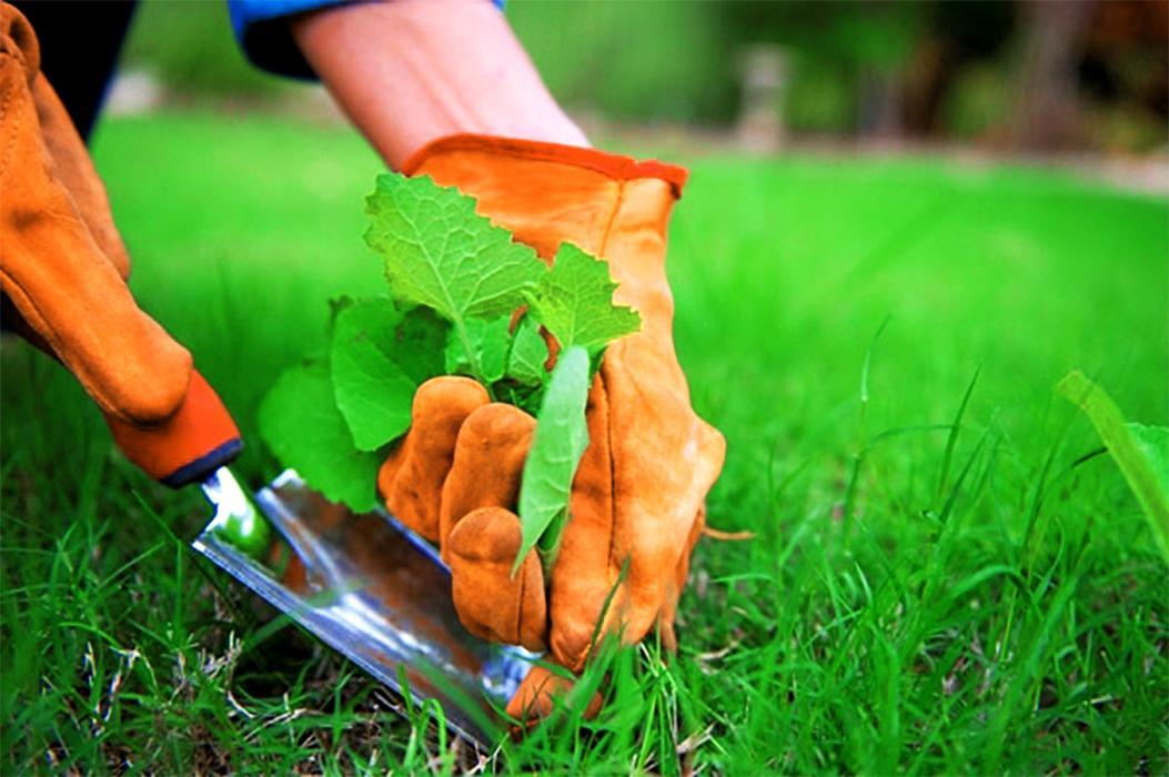 Как подсеять газон летом после зимы