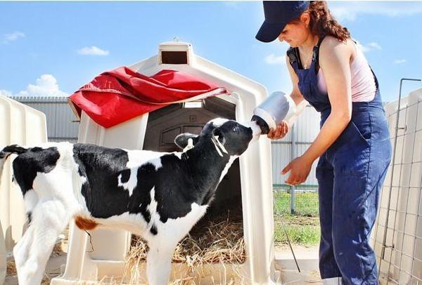 ЗЦМ (заменитель цельного молока) для телят
