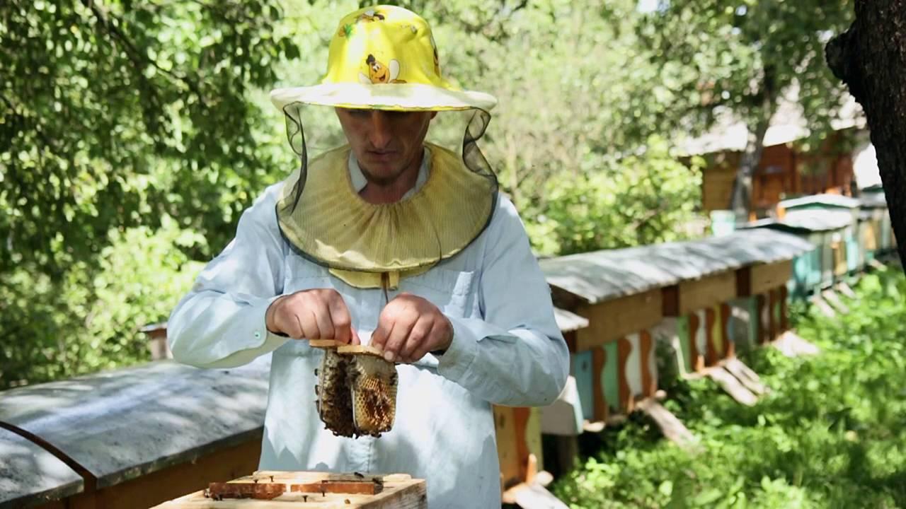 Разведение пчел: пчеловодство для начинающих от А до Я, с чего начать новичку и какой улей выбрать
