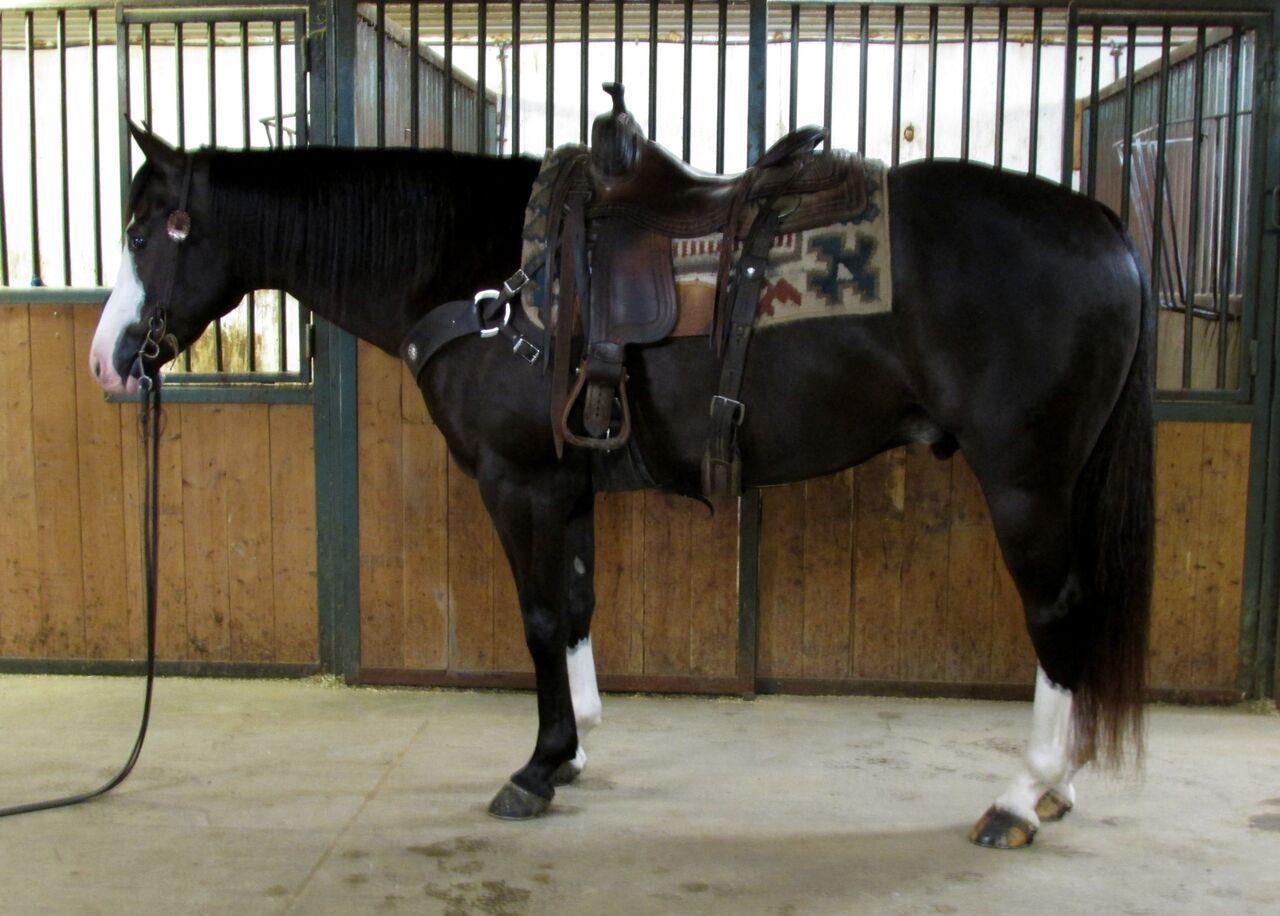 Как называются роды лошади