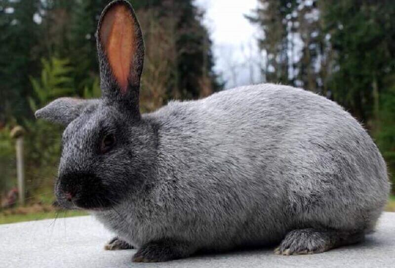 Кролик стучит задними лапами – почему и что делать
