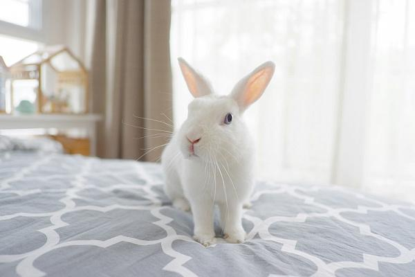 Можно ли кроликам давать ветки вишни
