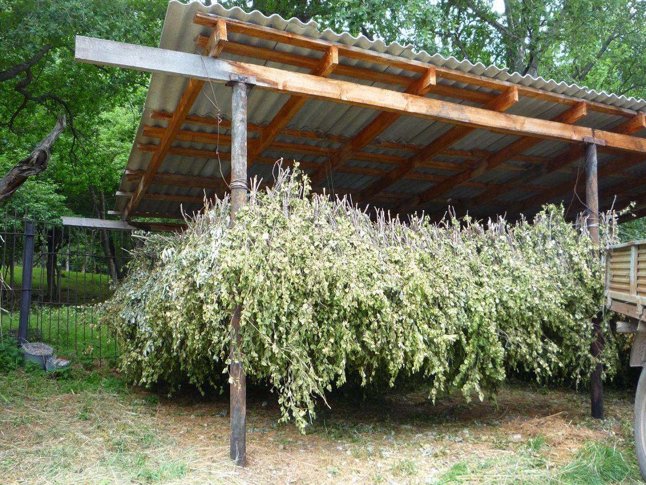 доброе фото веток деревьев для кроликов тепло радость людям