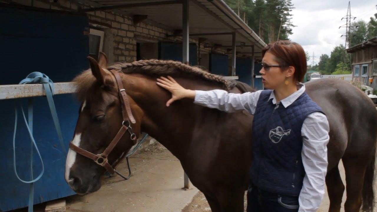 Уход за гривой и хвостом лошади