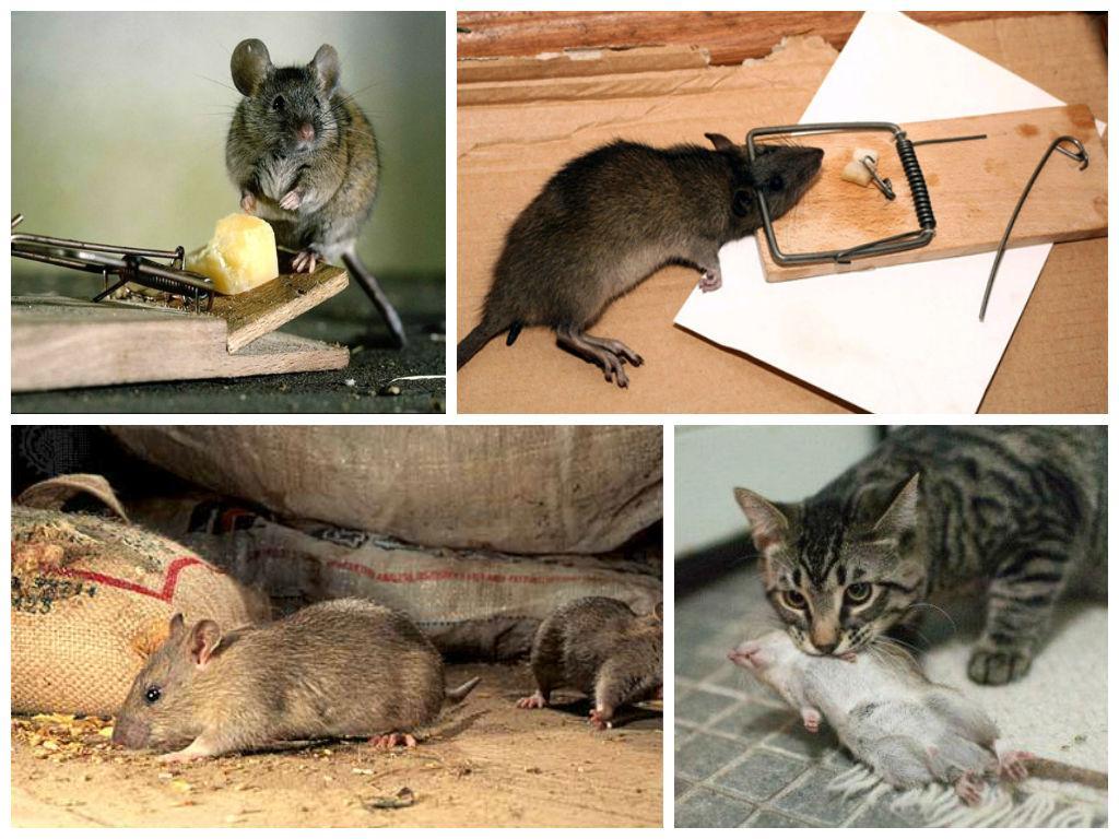 Картинки нормальные люди и мыши
