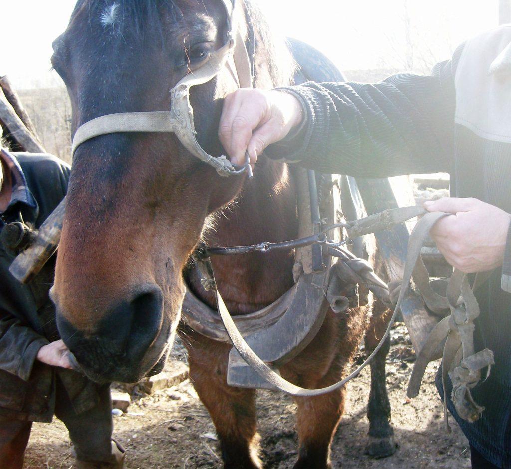 Упряжь для коней