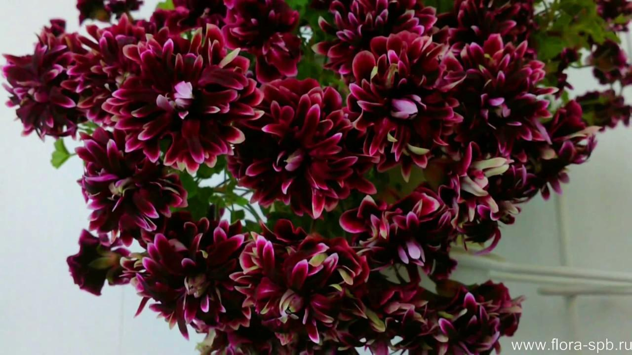 Сайт цветов в бийске