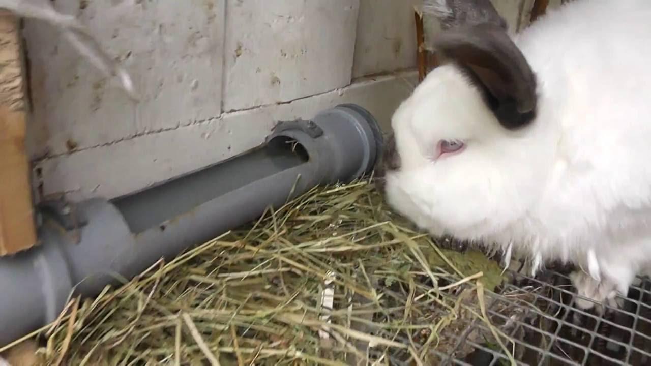 Поилка для кроликов своими руками из пластиковой фото 894