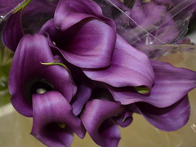 Фиолетовые цветы виды. Цветы фиолетового цвета. Названия, описание, значение цветов фиолетового цвета