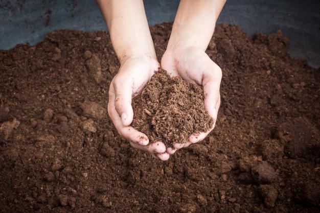 методы обеззараживания почвы для рассады томатов