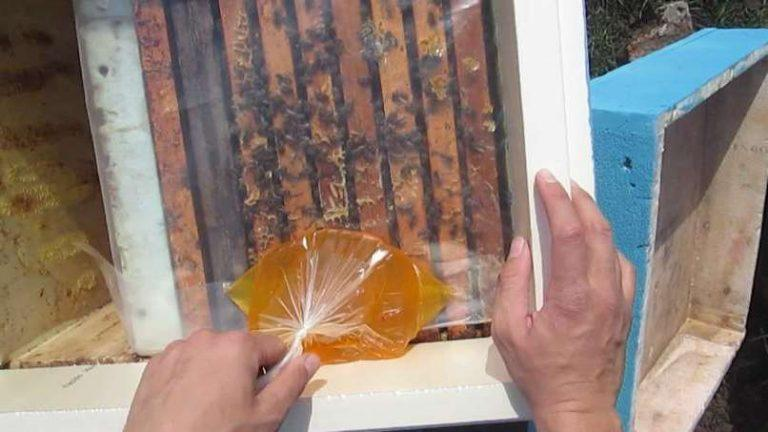 Сироп для пчел осенью