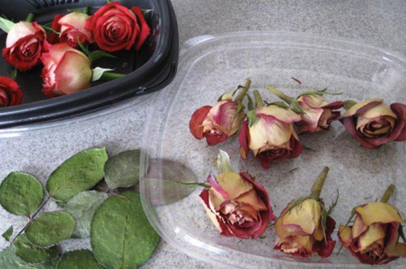 Цвет чайной розы в одежде: фото лучших образов
