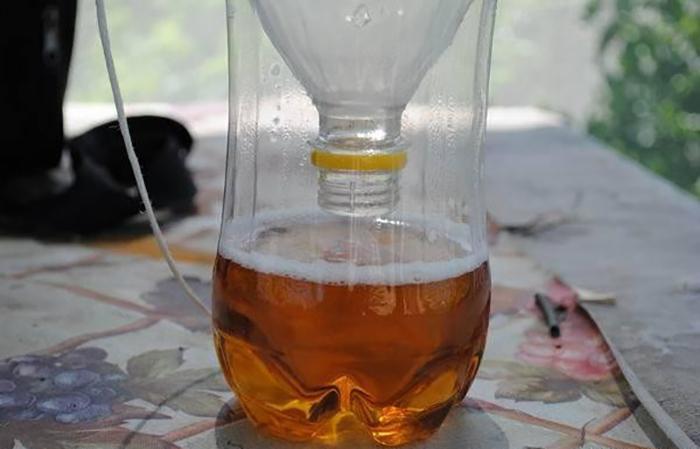 Ловушка для ос из пластиковой бутылки: фото и видео инструкция как сделать ловушку для пчел своими руками